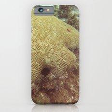 Coral  iPhone 6s Slim Case