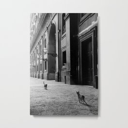 Two French Cats, Paris Left Bank black and white cityscape photograph / photography Metal Print