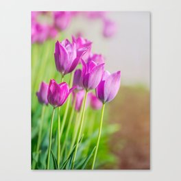 Beautiful view of tulips under sunlight landscape. Canvas Print