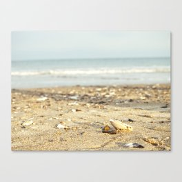 Shells in the Sand Canvas Print