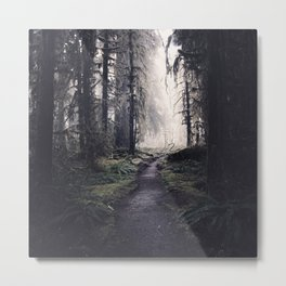 Magical Washington Rainforest Metal Print