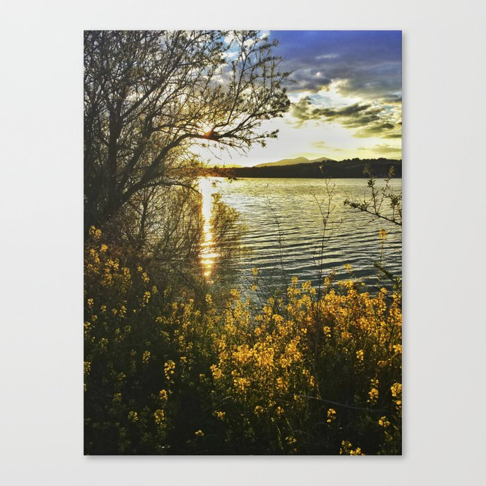 """Yellow flowers at sunset"" Canvas Print"
