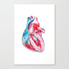 heart section Canvas Print
