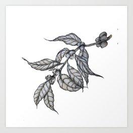 Arabica Coffee Leaves Art Print