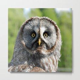 Owl_20180219_by_JAMFoto Metal Print
