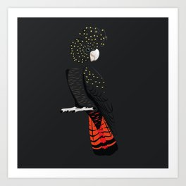 Red-tailed black cockatoo Art Print