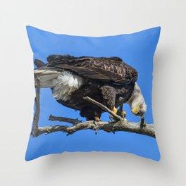 Alaskan Adult Bald_Eagle - Quizzical Throw Pillow