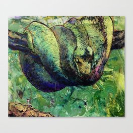 Green Tree Viper Canvas Print