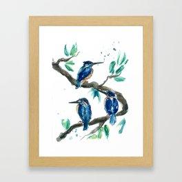 Three Kingfishers Framed Art Print