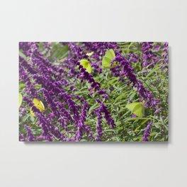 Yellow Butterflies on Purple flowers Metal Print