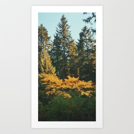 Autumn warmth - Pacific Northwest Art Print
