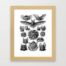 Ernst Haeckel Bats Framed Art Print