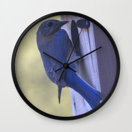 Eastern Bluebird Home Wall Clock
