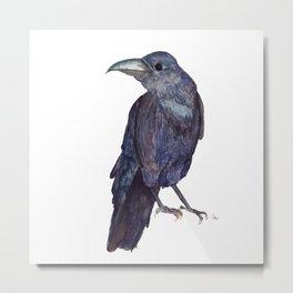 Raven is watching Metal Print