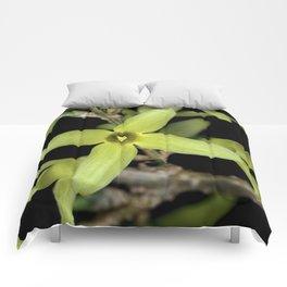 Forsythia Close up Comforters