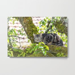 Grey cat camouflaged on top of a tree Metal Print