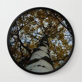 Trembling Aspen Trees in Jasper National Park Wall Clock
