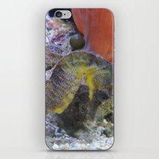 Sea Horses iPhone & iPod Skin