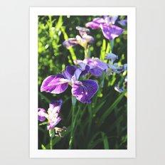Floral: Iris Art Print