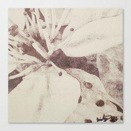 Lemon Myrtle Canvas Print