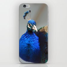Peacock world iPhone & iPod Skin