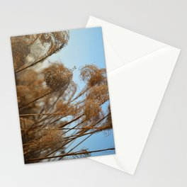 Curling Miscanthus Stationery Cards