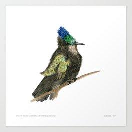 Antillean Crested Hummingbird Art Print