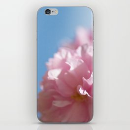 Japanese Spring - Prunus serrulata 2 648 iPhone Skin