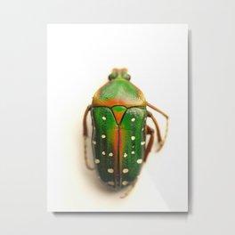 Beetle... Metal Print