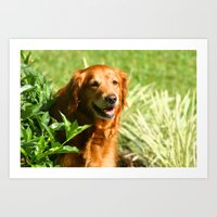 sassy Art Prints featuring Lady Sassy by Robin Curtiss
