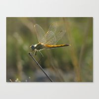 dragonfly Canvas Prints featuring dragonfly by giol's