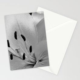 White Lily Flower Close Up Stationery Cards