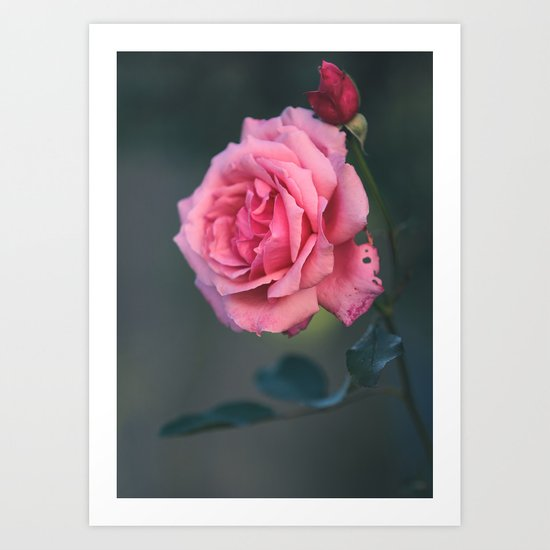 Rose - Pink Beauty Art Print
