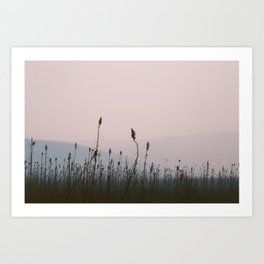 Forest Fire Aftermath Art Print