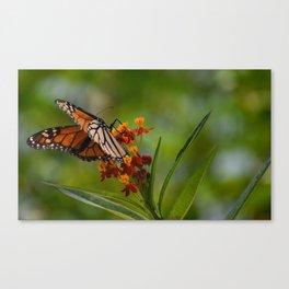 Elegant Butterfly Canvas Print