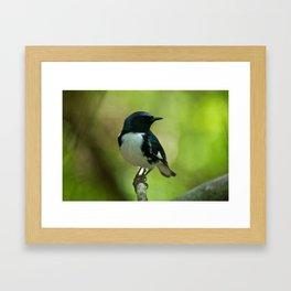 Black-throated Blue Warbler Framed Art Print