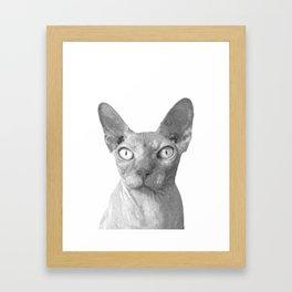 Black and White Sphynx Cat Framed Art Print