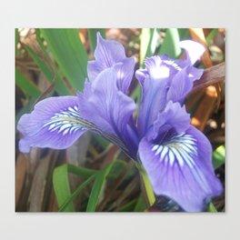 Pretty Purple Iris Canvas Print