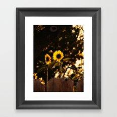 Texas Sunflowers Framed Art Print