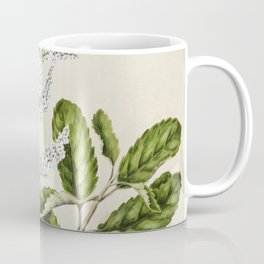 Antique plant New Zealand lilac drawn by Sarah Featon (1848-1927) Coffee Mug