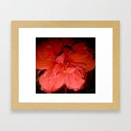 Tanto Amor (III) Framed Art Print