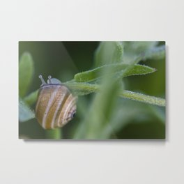 Snail on green #2 Metal Print