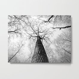 High in the Sky- Photo of top of tree from ground looking up Metal Print