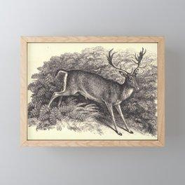 Antique Deer Framed Mini Art Print
