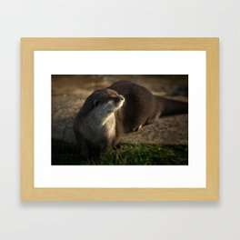 Otter Looking Into The Sunshine Framed Art Print
