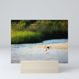 Black Skimmer Mini Art Print