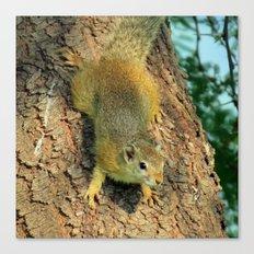 Cute little squirrel Canvas Print