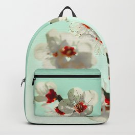 White cheery blossom blooms under turquoise sky. Backpack