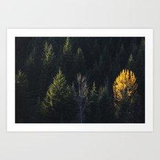 Fall at Trillium Lake, OR Art Print
