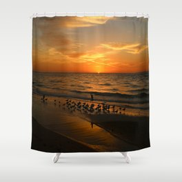 Gulls Gather On The Beach At Sunset Shower Curtain